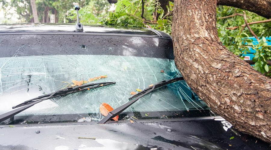 Nashville fallen tree damage repair car