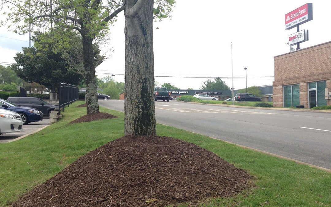 landscaping commercial Lebanon Pike 37214