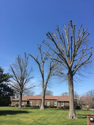 tree company trimming Crieve Hall