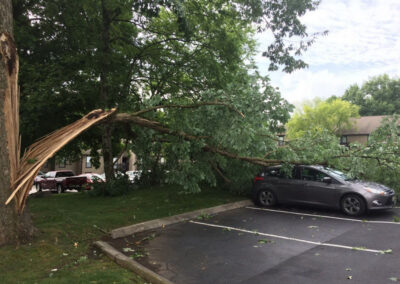 car crushed by tree Nashville