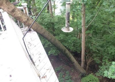 tree leaning on house nashville