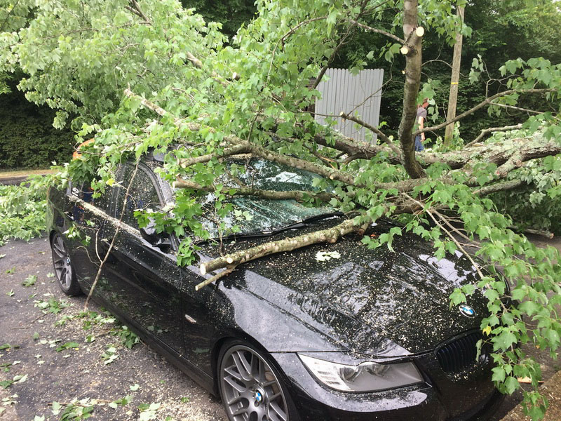 tree falls on car Nashville